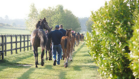 Shadwell stud tour mares and foals
